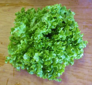 зелень на огороде Salat1-300x276