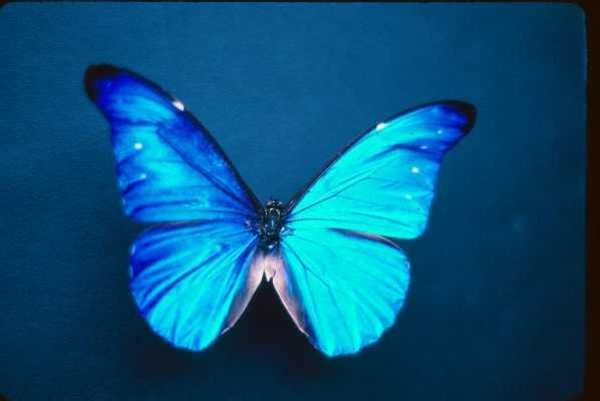 Leptiri Butterfly