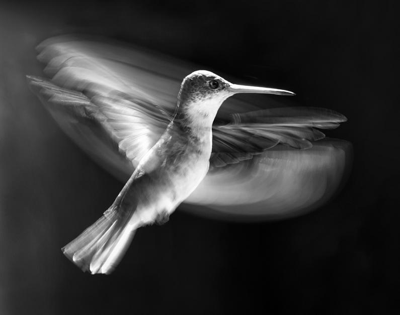பறவைகளின் திகைப்பூட்டுகிற பறக்கும் காட்சிகள்  Bird-high-speed-photography-wings