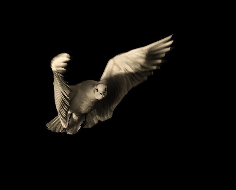 பறவைகளின் திகைப்பூட்டுகிற பறக்கும் காட்சிகள்  Flying-bird