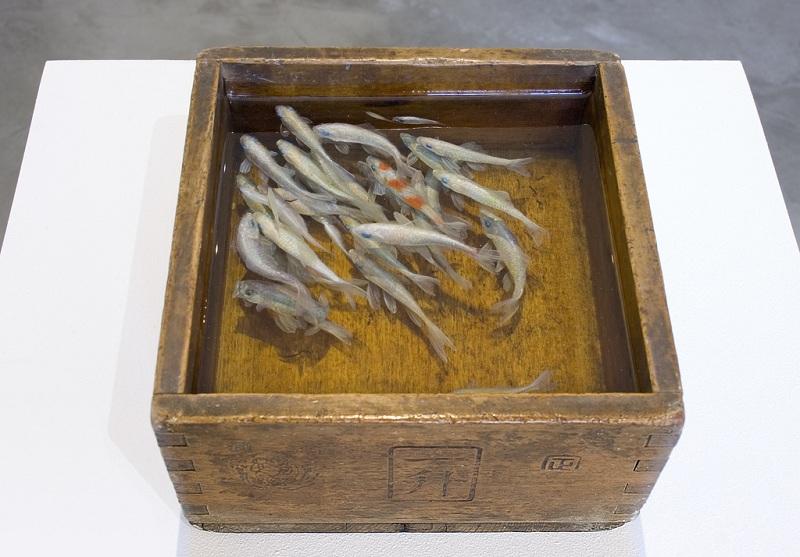 நம்பமுடியாத 3 டி ஓவியங்கள்  3d-fish-sculpture-paintings-layer-by-layer-riusuke-fukahori-1
