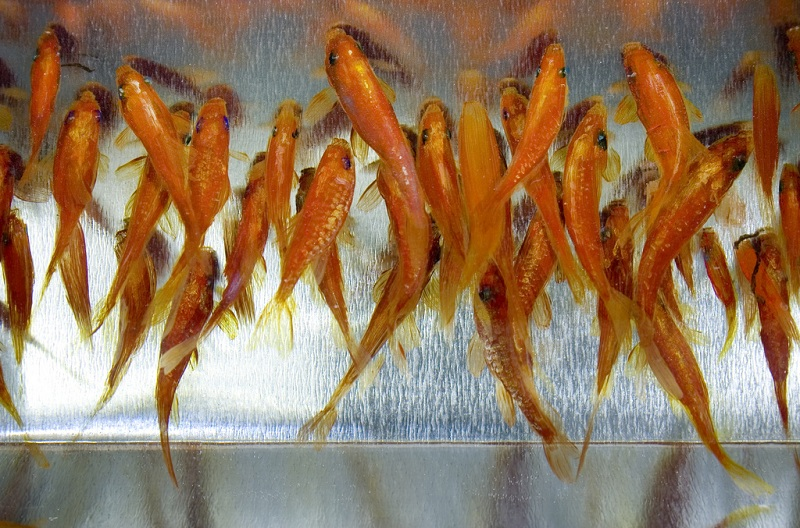நம்பமுடியாத 3 டி ஓவியங்கள்  3d-fish-sculpture-paintings-layer-by-layer-riusuke-fukahori-11