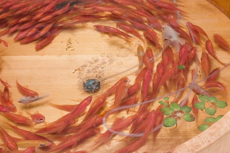 நம்பமுடியாத 3 டி ஓவியங்கள்  3d-fish-sculpture-paintings-layer-by-layer-riusuke-fukahori-7