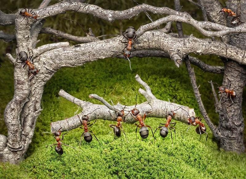 எறும்புகளின் அழகிய காட்சிகள்!! Real-ants-in-fantasy-settings-landscapes-andrey-pavlov-1