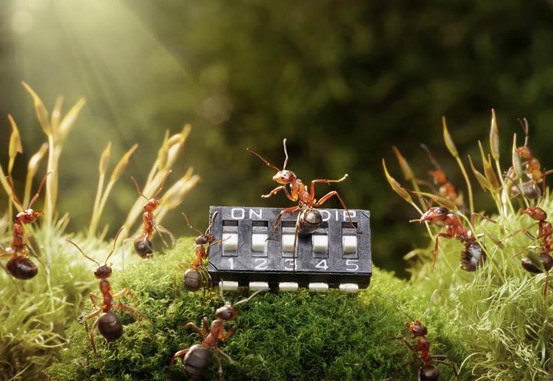 எறும்புகளின் அழகிய காட்சிகள்!! Real-ants-in-fantasy-settings-landscapes-andrey-pavlov-11