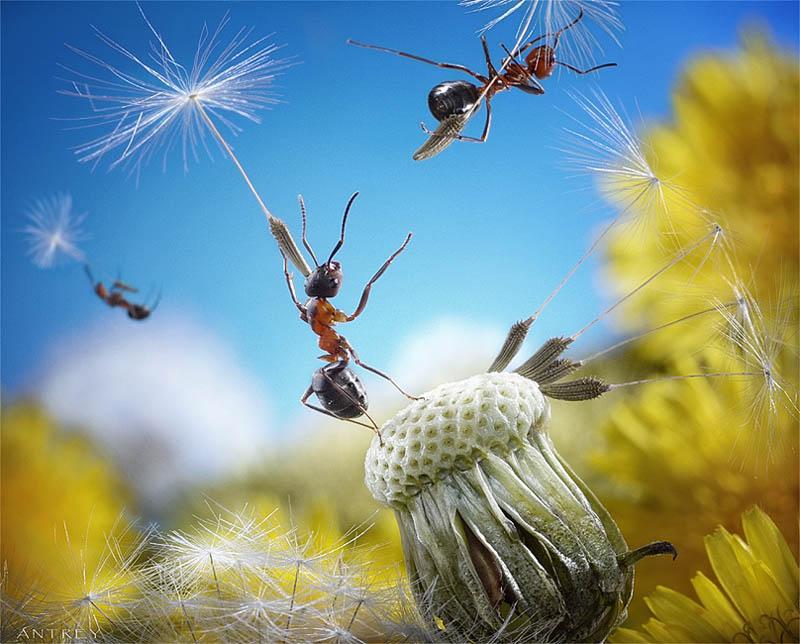 எறும்புகளின் அழகிய காட்சிகள்!! Real-ants-in-fantasy-settings-landscapes-andrey-pavlov-13