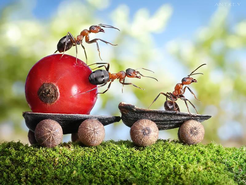 எறும்புகளின் அழகிய காட்சிகள்!! Real-ants-in-fantasy-settings-landscapes-andrey-pavlov-14