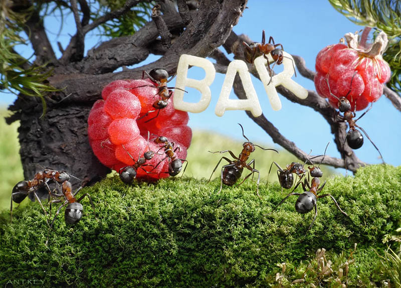 எறும்புகளின் அழகிய காட்சிகள்!! Real-ants-in-fantasy-settings-landscapes-andrey-pavlov-15