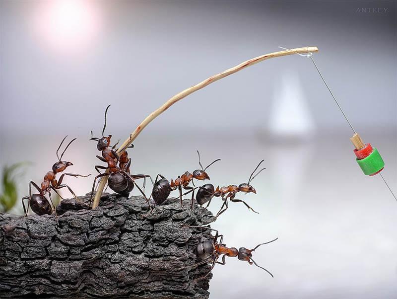 எறும்புகளின் அழகிய காட்சிகள்!! Real-ants-in-fantasy-settings-landscapes-andrey-pavlov-16