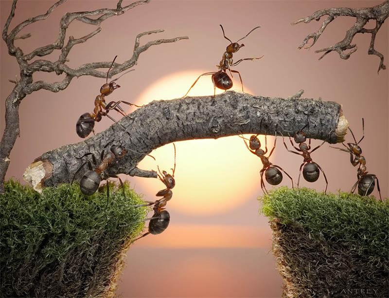 எறும்புகளின் அழகிய காட்சிகள்!! Real-ants-in-fantasy-settings-landscapes-andrey-pavlov-4