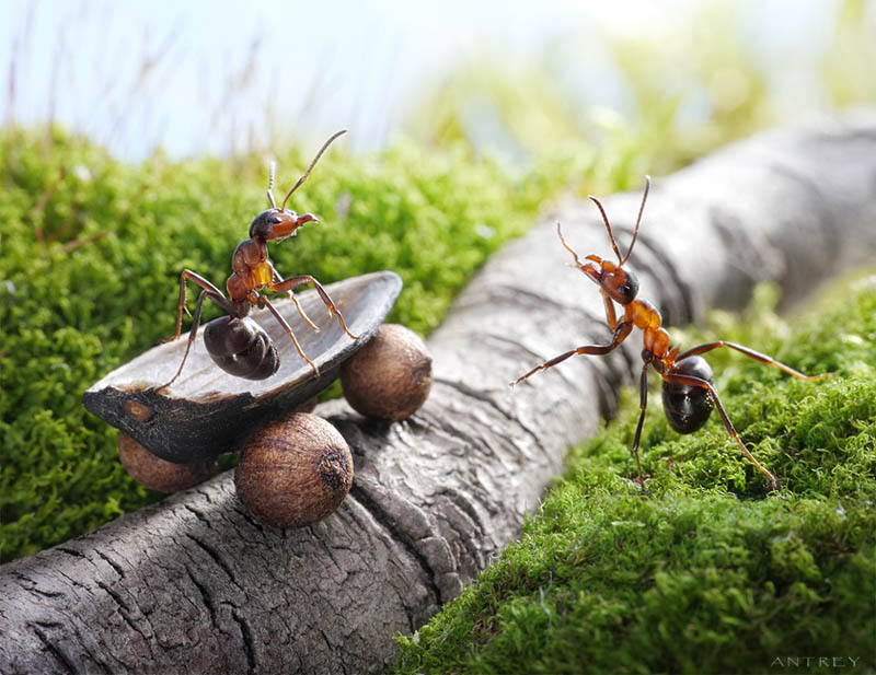 எறும்புகளின் அழகிய காட்சிகள்!! Real-ants-in-fantasy-settings-landscapes-andrey-pavlov-6