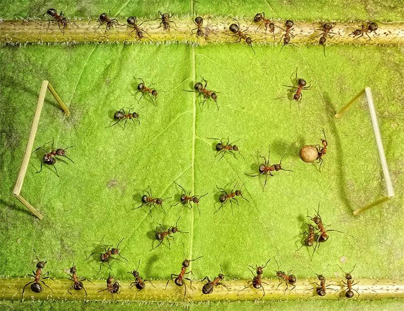 எறும்புகளின் அழகிய காட்சிகள்!! Real-ants-in-fantasy-settings-landscapes-andrey-pavlov-8