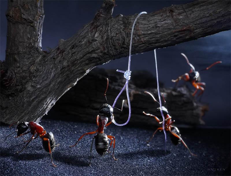 எறும்புகளின் அழகிய காட்சிகள்!! Real-ants-in-fantasy-settings-landscapes-andrey-pavlov-9