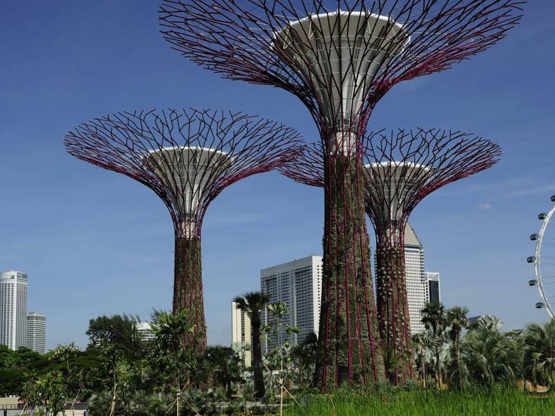 அழகிய சிங்கப்பூரில் அழகிய மரங்கள்  Gardens-by-the-bay-supertrees-singapore-11