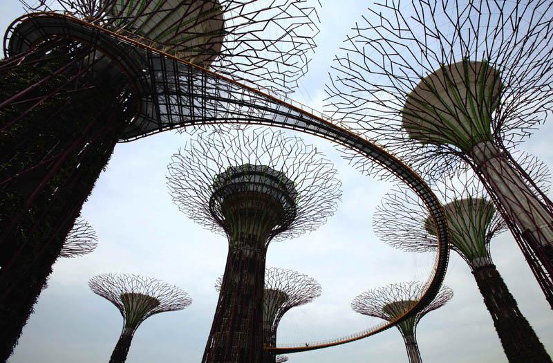 அழகிய சிங்கப்பூரில் அழகிய மரங்கள்  Gardens-by-the-bay-supertrees-singapore-3