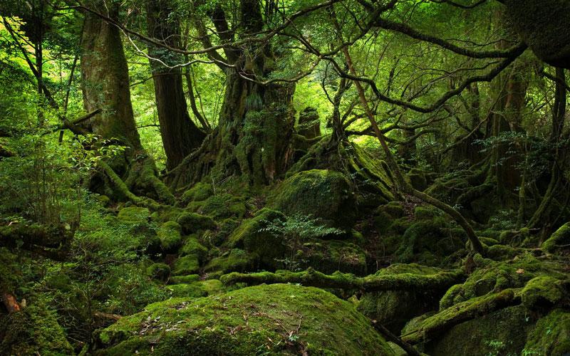 Zanimljivosti iz  geografije - Page 2 Moss-covered-forest-of-yakushima-island-japan-1