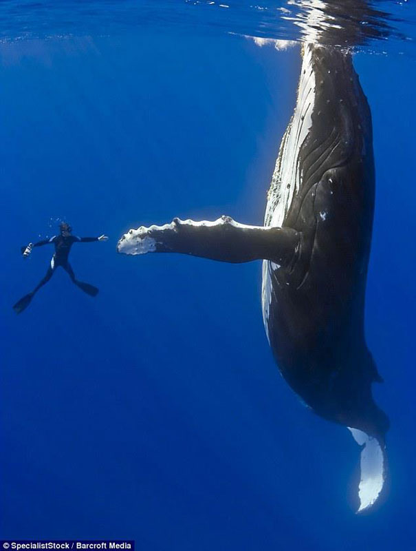 50 fotazas Diver-whale-high-five-perfect-timing
