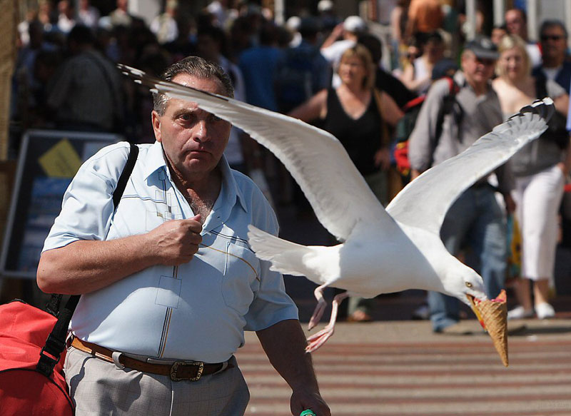 50 fotazas Seagull-takes-ice-cream-perfect-timing