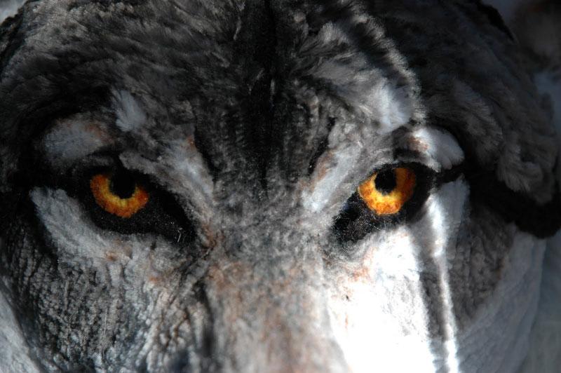 குழாய் துடைக்கும் பொருள்களிலிருந்து நம்பமுடியாத உயிரோட்டமுள்ள விலங்குகளின் உருவங்கள்  Pipe-cleaner-wolf-by-lauren-ryan-2