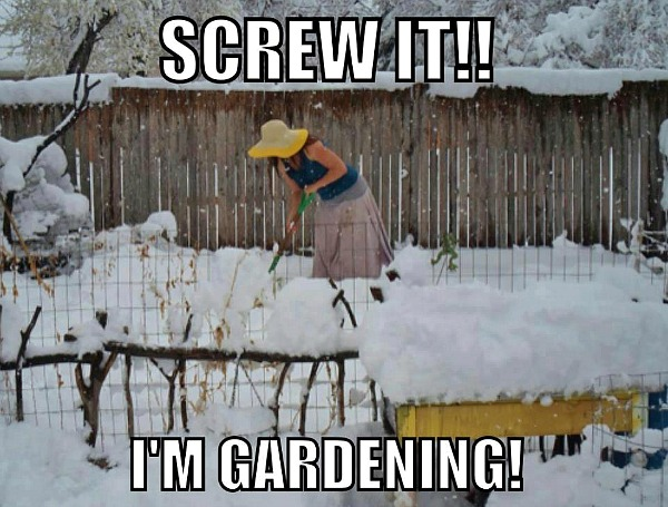Turan in the Western Mountains - Page 2 Gardening-in-snow