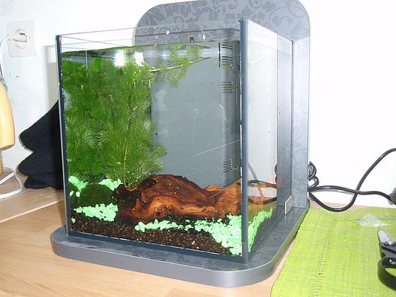 un petit poisson, deux petits poissons s'aimaient d'amour tendre... 10020654.ed5b3f83.560