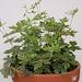 Geranium : espèces et variétés 9890828.5c11dba8.75x