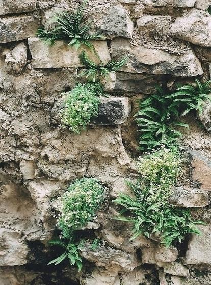 flore des vieux murs, rochers  et rocailles naturelles 9751761.4ad27ff8.560