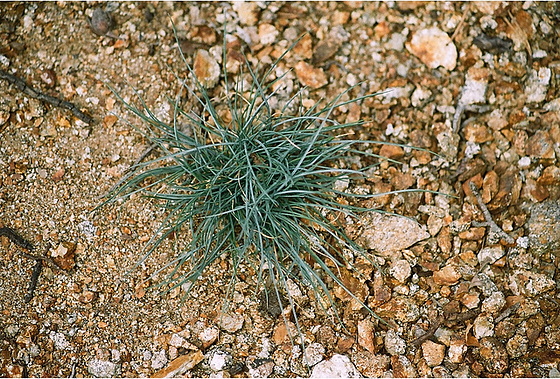 les petites Poaceae et Cyperaceae 9914009.85bc00f6.560