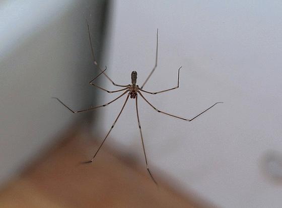 les 8 pattes - araignées et compagnie 10480388.23a0b0bb.560