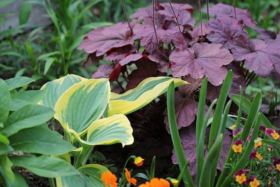 Quelques plantes d'ombre ou mi-ombre 10480812.d6191966.560