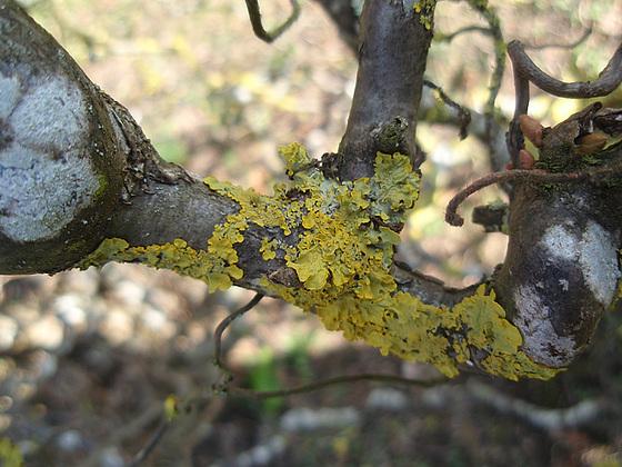 mousses et lichens [verrouillé] 10152590.2979d851.560