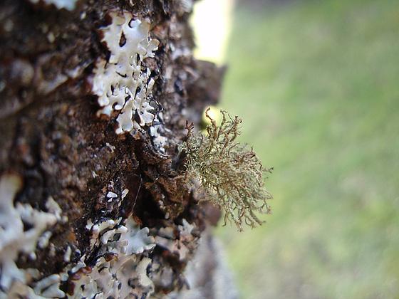 mousses et lichens [verrouillé] 10152600.c301d00a.560