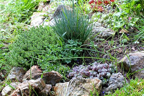 les petites Poaceae et Cyperaceae 10363290.5a4e03f9.560