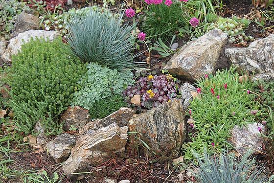 rénovation d'une rocaille - Page 2 10606484.562827e0.560