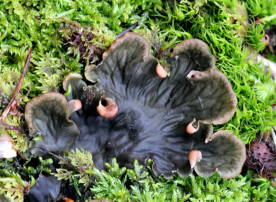 mousses et lichens [verrouillé] 10217018.f8380fef.560
