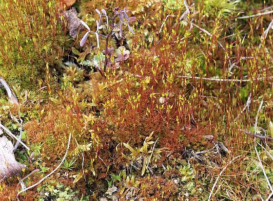 mousses et lichens [verrouillé] 10217079.2c2a7170.560