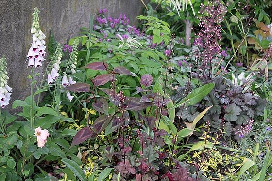 Quelques plantes d'ombre ou mi-ombre 10657378.aba03f63.560