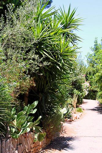 (13) Le Parc du Mugel et son jardin exotique - La Ciotat 11020037.38adb6c8.500