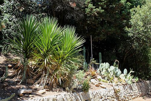 (13) Le Parc du Mugel et son jardin exotique - La Ciotat 11020040.dd4fd034.500