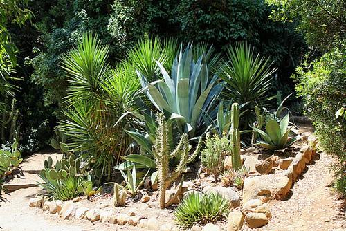 (13) Le Parc du Mugel et son jardin exotique - La Ciotat 11020041.50b7409e.500