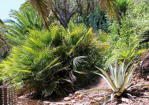 (13) Le Parc du Mugel et son jardin exotique - La Ciotat 11020042.e1f17dee.500