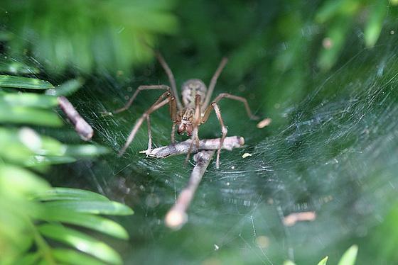 les 8 pattes - araignées et compagnie - Page 2 10840768.3422b13d.560