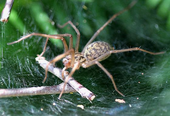 les 8 pattes - araignées et compagnie - Page 2 10840772.4465b0fa.560