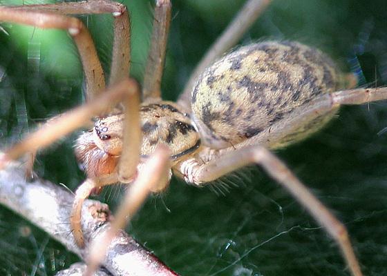 les 8 pattes - araignées et compagnie - Page 2 10840773.8cb928b4.560