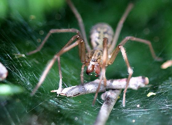 les 8 pattes - araignées et compagnie - Page 2 10840794.9716a56c.560