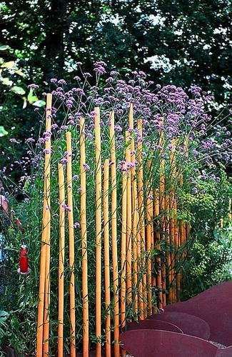 Verveine et bambous