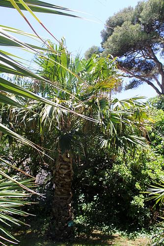 (13) Le Parc du Mugel et son jardin exotique - La Ciotat 11144559.018ded89.500