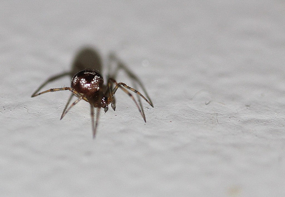 les 8 pattes - araignées et compagnie 10765351.3314abaa.560