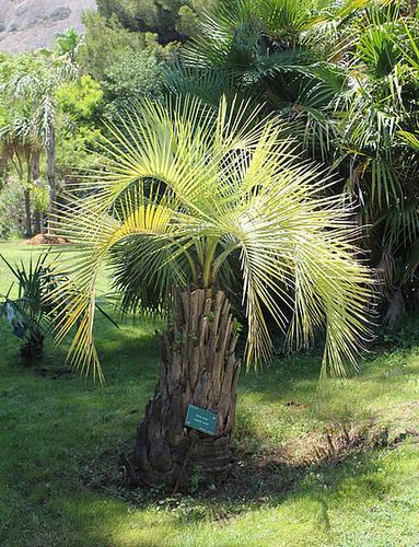 (13) Le Parc du Mugel et son jardin exotique - La Ciotat 10997581.8793bd99.500