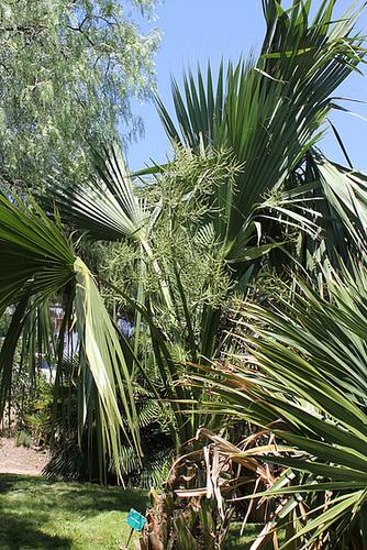 (13) Le Parc du Mugel et son jardin exotique - La Ciotat 10997583.c77f9f98.500